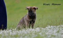 7,5 weeks / last common photos ,,K,,Monur