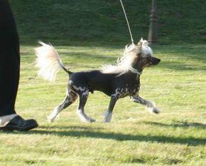 Proud Pony Turbo Lover