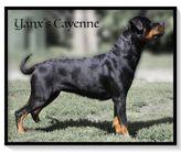 Yanx's Cayenne