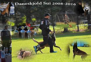 Daneskjold Sui