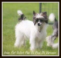 Irène Fist Velvet Paw Du Pavé De Varennes