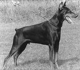 Kadrille-kalmere (sf 1907/71)