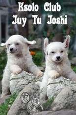 Ksolo Club Juy Tu Joshi