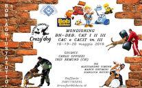Gara Mondioring Crazy Dog