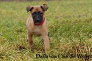 Dalila vom Clan der Wölfe