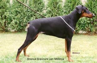 Branca Bravoure van Melinca