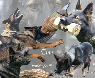 Emy vom Großen Ex