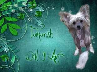 Tamarsh Will I Am