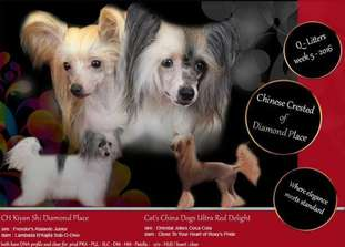 Cat's China Dogs Ultra Red Delight