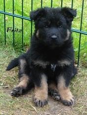 Fritz vom Weggefährten