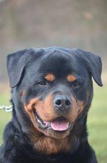 Elvis Bria-Dogs