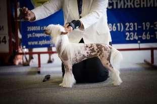 Olegro Katrin Madam Million