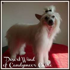 Desert Wind Of Candymoor Castle