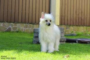 Mimi Dog Doll Molosos Gratzi