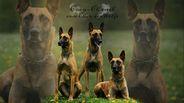 Coco Chanel vom Clan der Wölfe