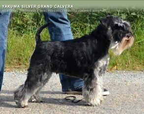 Yakuma Silver Grand Calvera