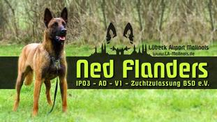 Ned Flanders vom roten Merlin