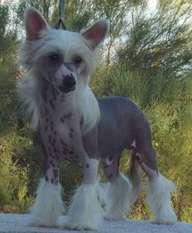 Mano Ponis Elbrusas