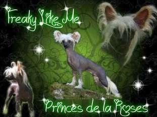 Freaky Like Me Princes De La Roses