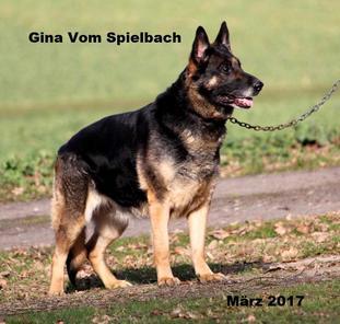 Gina vom Spielbach