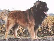 Slåttvika's Bobo-bear