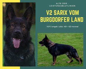 Sarix vom Burgdorfer Land