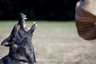 Jefe vom Wolfsweiher