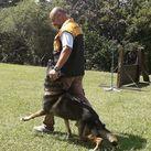 Volpy do Caio work Dog's