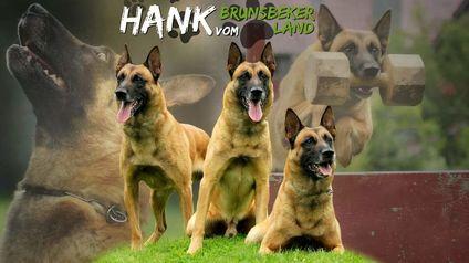 Hank vom Brunsbeker Land