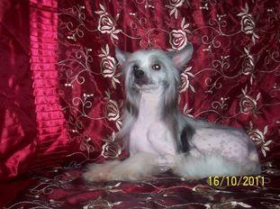 Hoschi Banzai Princess Gold Anet