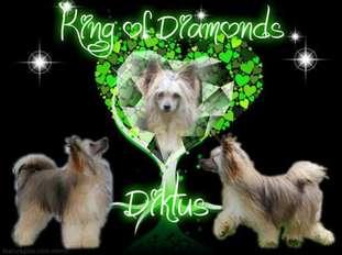 Diktus King Of Diamonds