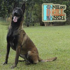 T-Raika du Drill Ranch