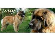 Ann's Lions Livia