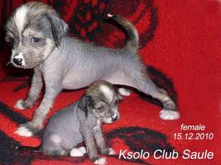 Ksolo Club Saule