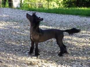 Kokeshi'c Dogs Indiana