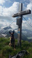 working-dog Derrec