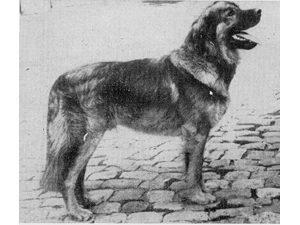 Akbar V. Schützenrain