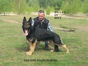 Vox vom Sulzachgrund