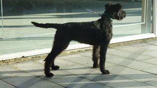 Dutydog's Astrid