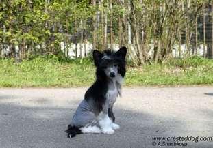Angel Look Figaro