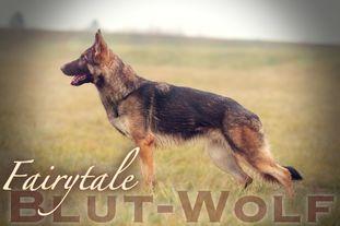 Fairytale Blut-Wolf