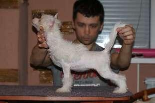 Mimi Dog Doll Olmeca