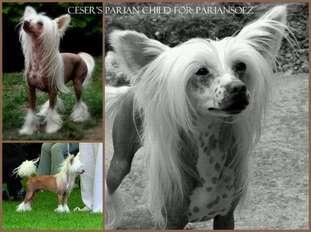 Ceser's Parian Child For Pariansoez