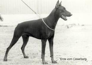 Eros vom Cesarberg