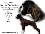 Jivaro van het Twentse Ros