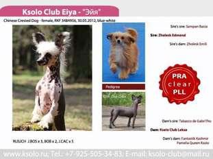 Ksolo Club Eiya