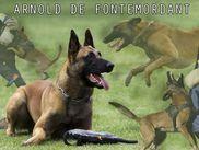 Arnold de Fontemordant