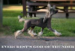 Evercrest's God Of Thunder