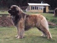 Lejonvinden's Duke Of Teddybear's