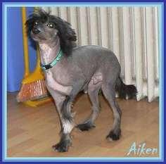 Aiken Little Sweetie